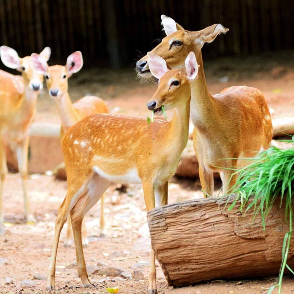 Dusit Zoo in Bangkok-Thailand
