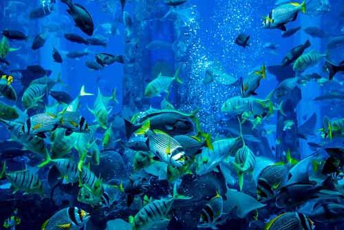 Dubai Aquarium in Dubai